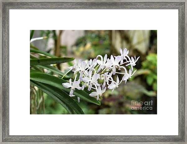 Blooming White Flower Spike Framed Print