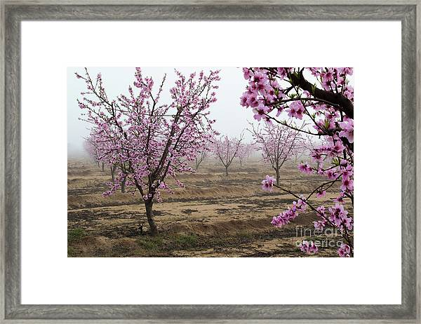 Blossom Trail Framed Print