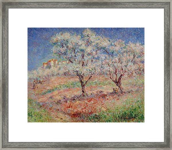 Blossom Trees  Framed Print