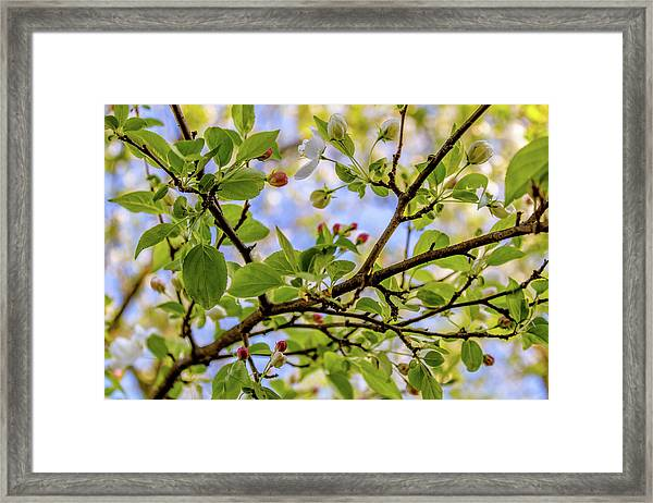 Blossoms And Leaves Framed Print