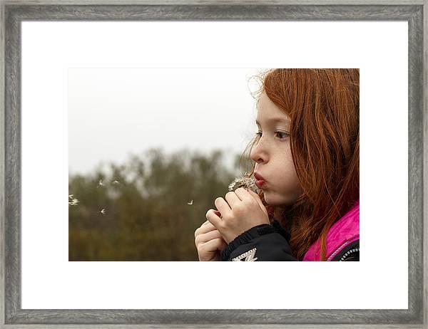 Blowing Dandelions Framed Print