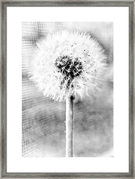 Blowing In The Wind Pencil Effect Framed Print