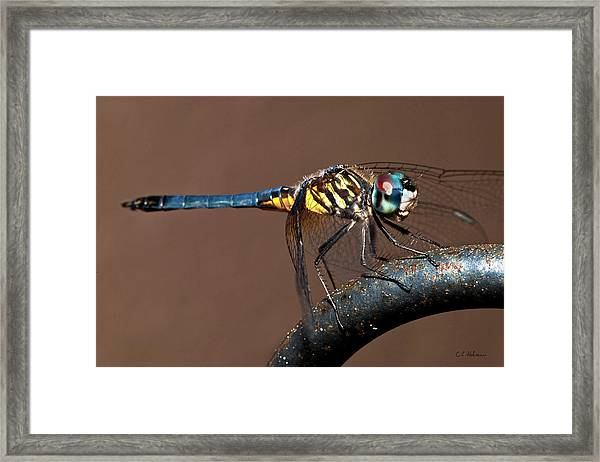 Blue And Gold Dragonfly Framed Print