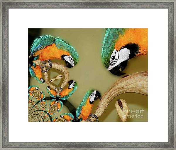 Blue And Gold Macaw Parrot Abstract Framed Print