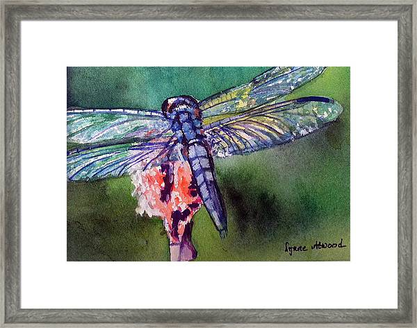 Blue And Green Dragonfly Framed Print