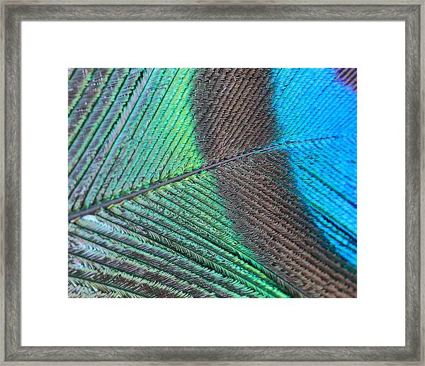 Blue And Green Feathers Framed Print