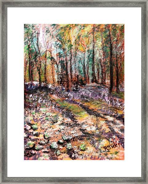 Blue Bell Woods Framed Print