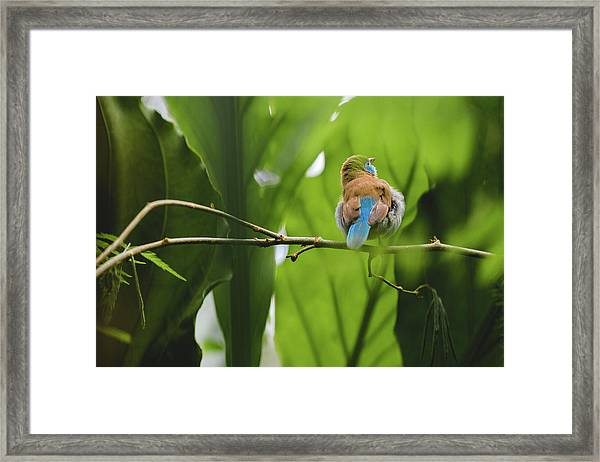Blue Bird Has An Itch Framed Print