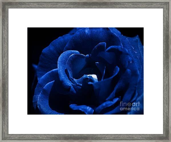 Blue Blue Rose Framed Print