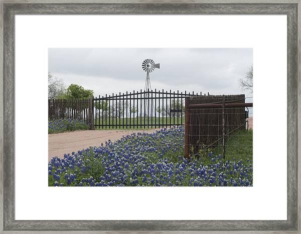 Blue Bonnets By Gate Framed Print