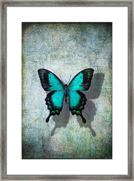 Blue Butterfly Resting Framed Print