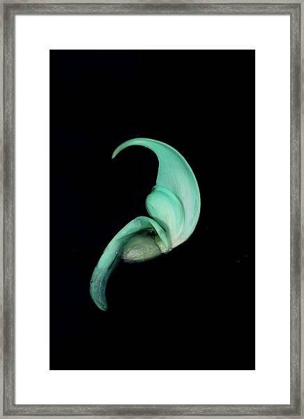 Blue Claw Framed Print