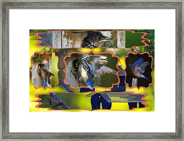 Blue Collage 2 Framed Print by Angel Cher