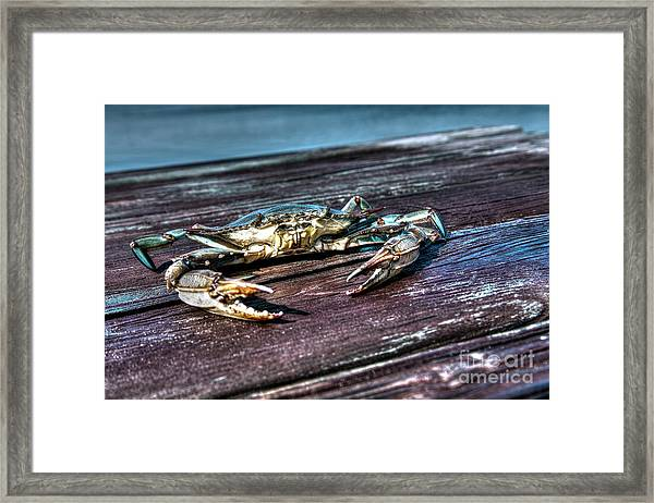 Blue Crab - Above View Framed Print