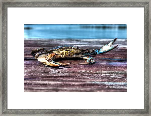 Blue Crab - Big Claws Framed Print
