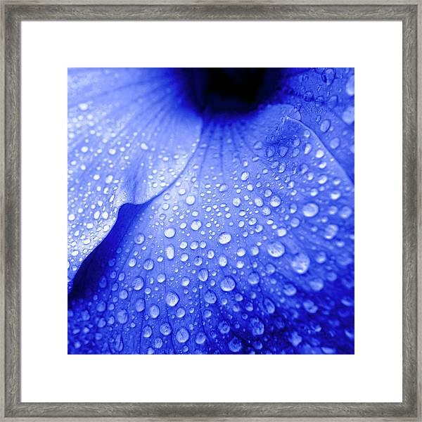 Blue Droplets Framed Print