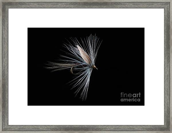 Blue Dun Framed Print