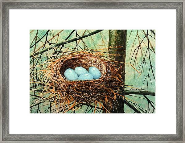 Blue Eggs In Nest Framed Print