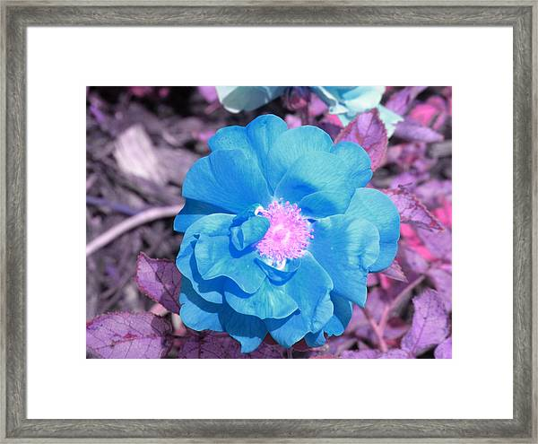 Blue Framed Print by Evan Pullins