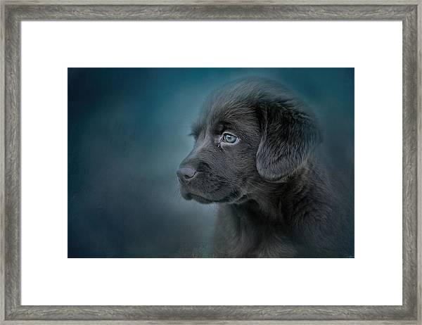 Blue Eyed Puppy Framed Print