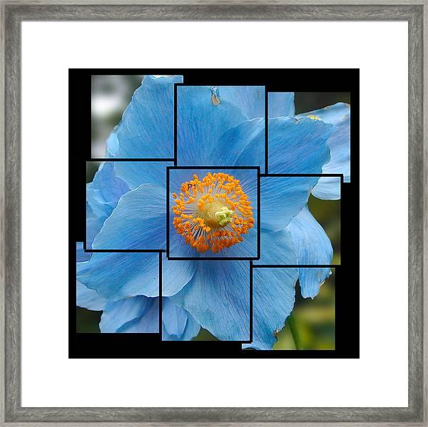 Blue Flower Photo Sculpture  Butchart Gardens  Victoria Bc Canada Framed Print