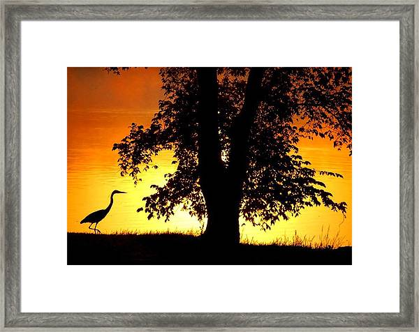 Blue Heron At Sunrise Framed Print