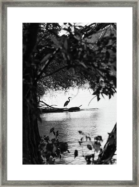Blue Heron In Black And White. Framed Print
