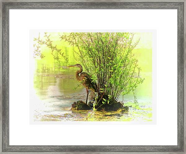 Blue Heron Island Framed Print