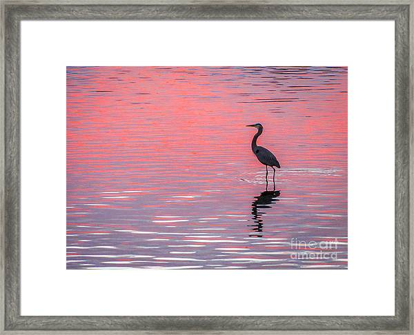 Framed Print featuring the photograph Blue Heron - Pink Water by Tom Claud