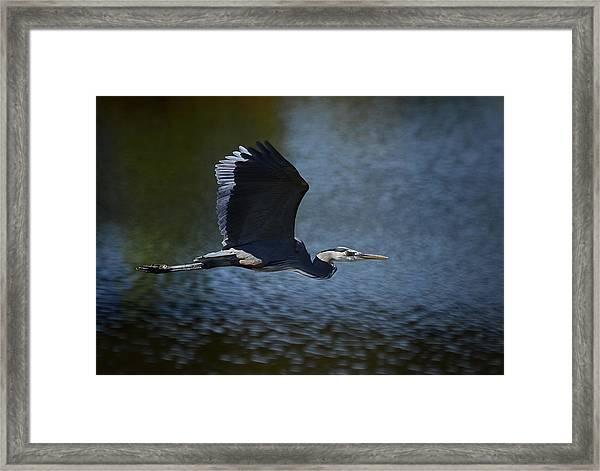Blue Heron Skies  Framed Print