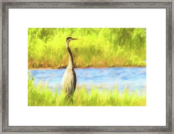 Blue Heron Standing Tall And Alert Framed Print