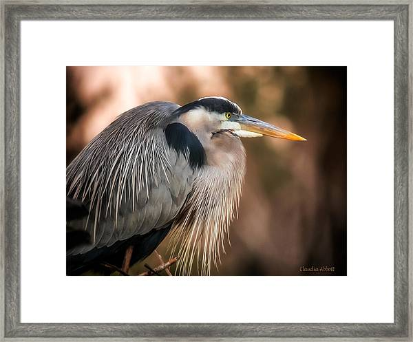 Framed Print featuring the photograph Blue Heron Thinking by Claudia Abbott