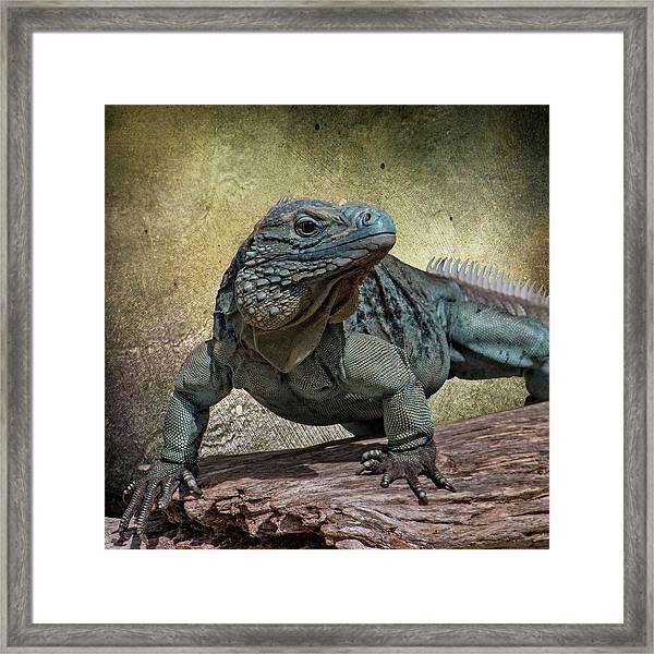Blue Iguana Framed Print
