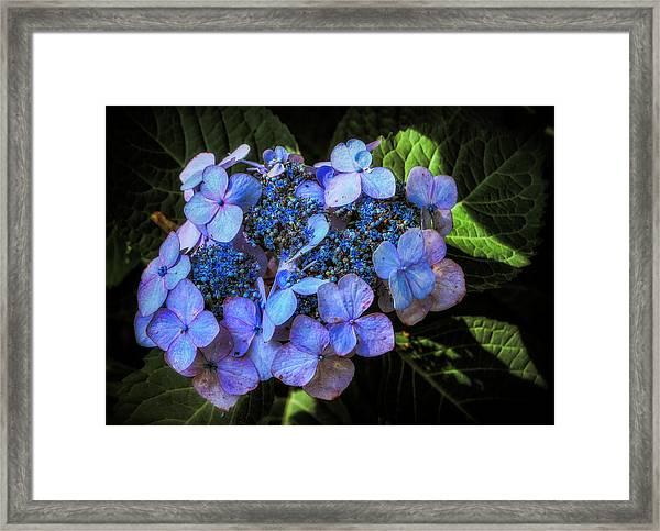 Blue In Nature Framed Print