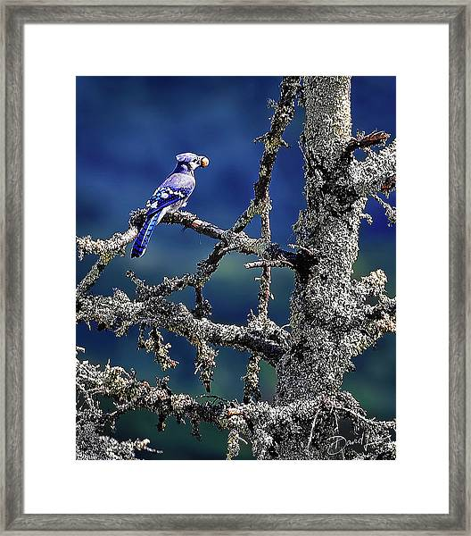 Framed Print featuring the photograph Blue Jay Mountain by David A Lane