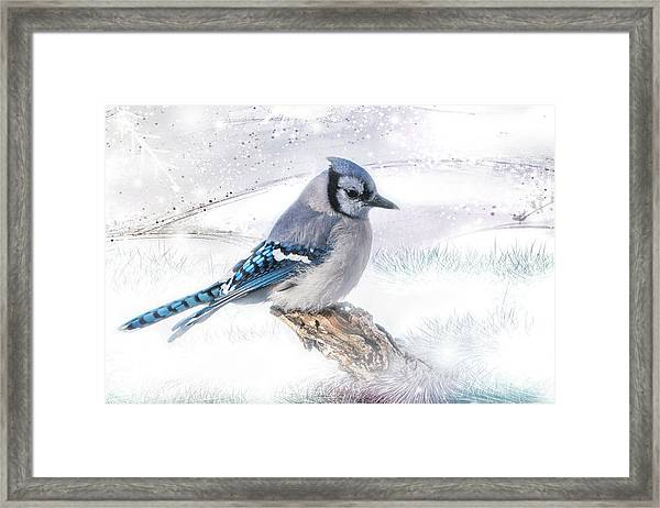 Framed Print featuring the photograph Blue Jay Snow by Patti Deters