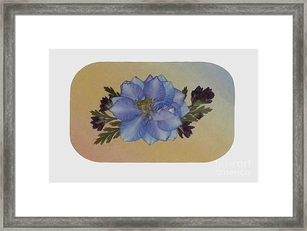 Blue Larkspur And Oregano Pressed Flower Arrangement Framed Print
