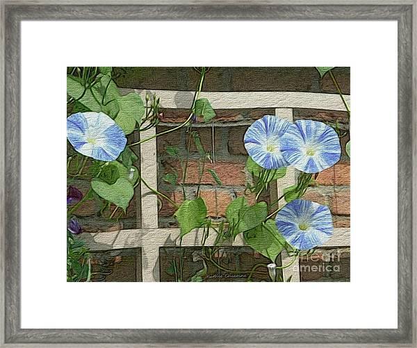 Blue Morning Glories Framed Print