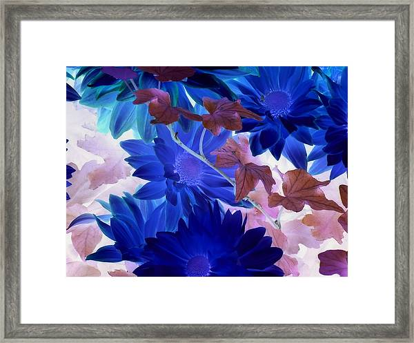 Blue Mums With Purple Ivy Framed Print
