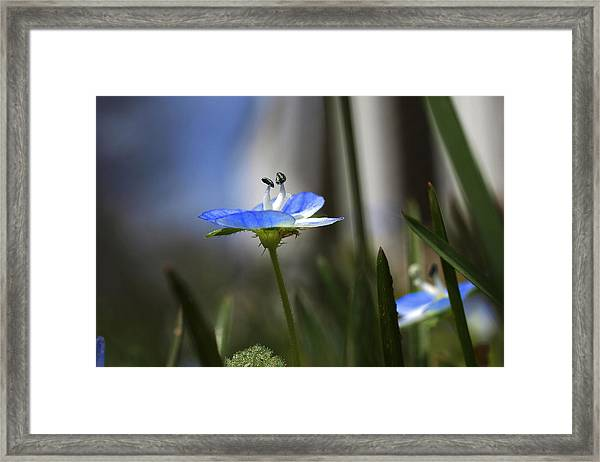 Blue On Green Framed Print by John Ellis