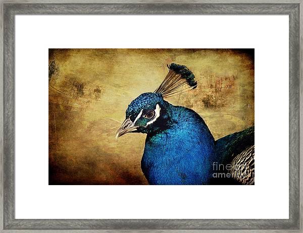 Blue Peacock Framed Print