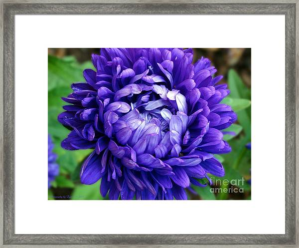 Blue Petals Framed Print