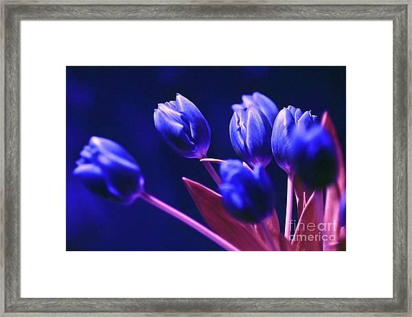 Blue Poetry Framed Print