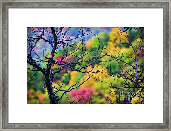 Blue Ridge Autumn Framed Print
