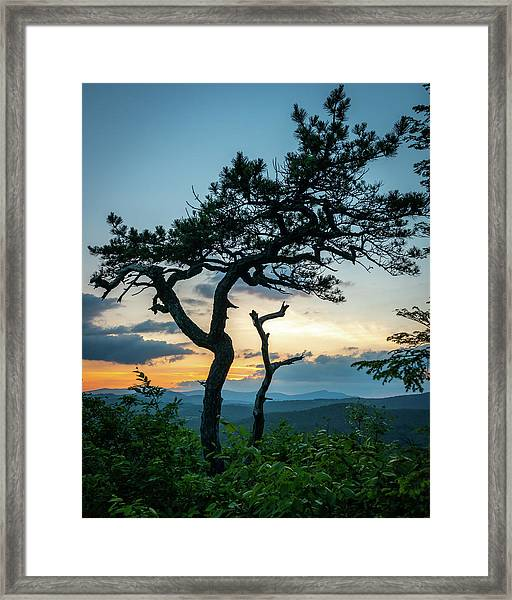 Blue Ridge Mountains Dr. Tree Framed Print