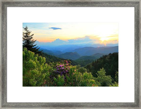 Blue Ridge Parkway And Rhododendron  Framed Print