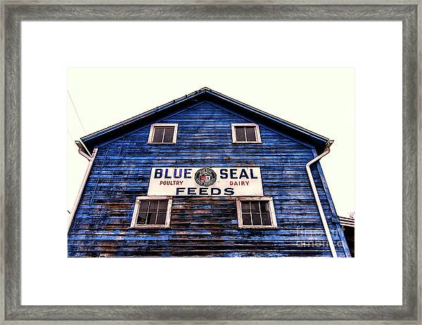 Blue Seal Feeds Framed Print