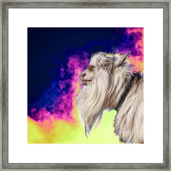Blue The Goat In Fog Framed Print