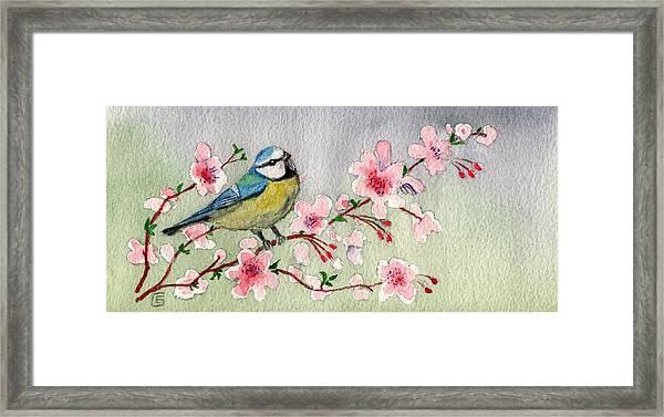 Blue Tit Bird On Cherry Blossom Tree Framed Print