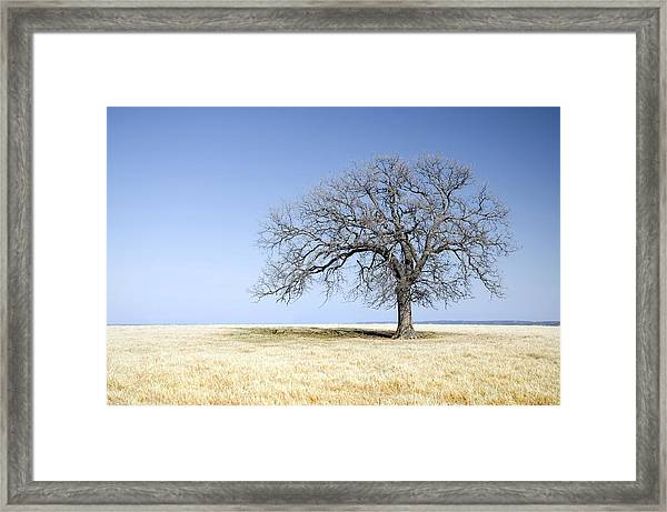 Blue To Remember Framed Print